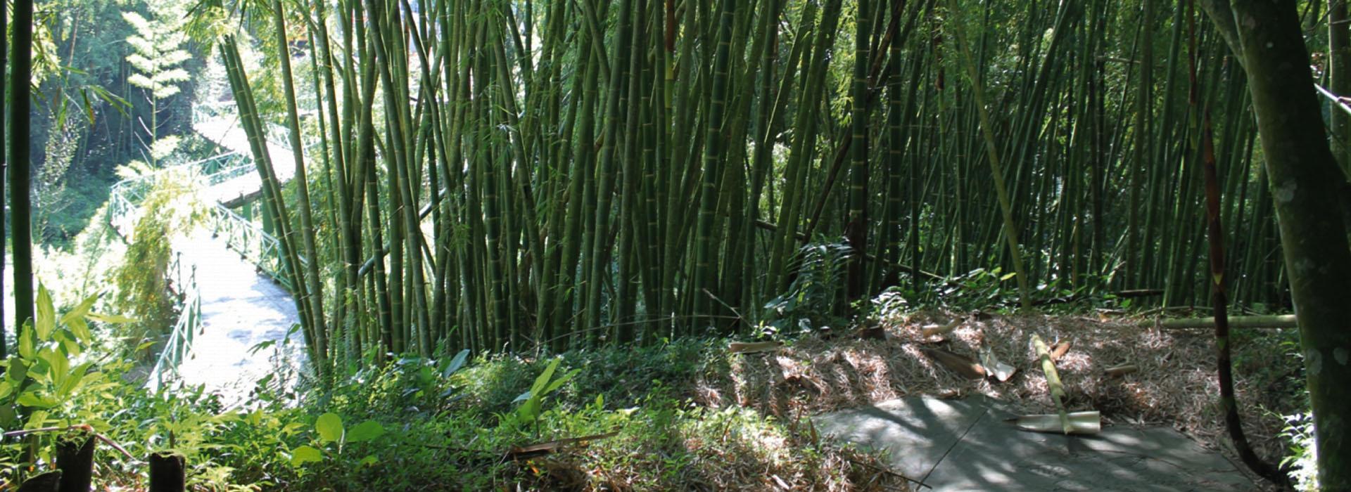 bambusario-1